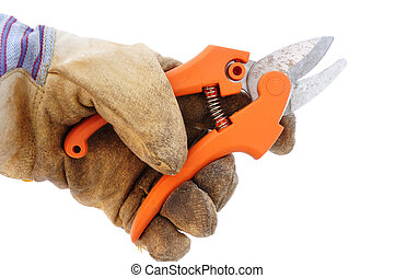 Holding Pruning Shears Using Leather Work Glove Isolated on...