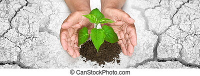 holdingen, träd, växande, räcker
