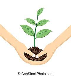 holdingshanden, jonge, twee, plant.