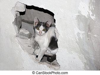 hole., gatto