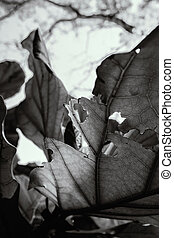 Holes on the leaves in black and white