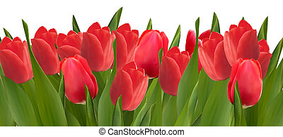 Holiday background with bouquet of red flowers. Vector illustration.