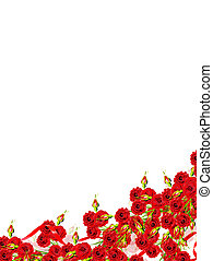Holiday card. Red roses on a white background