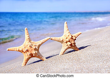 holiday concept - two sea-stars walking on sand beach...