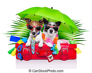 holiday dogs on a red bag dressed as tourists