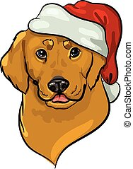 golden retriever in santa hat - Holiday portrait of golden ...