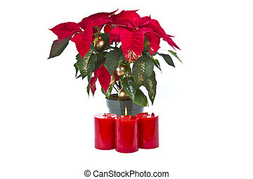 Poinsettia with red candles and glitter on white background