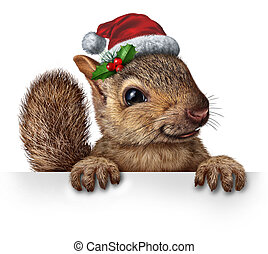 Holiday Squirrel - Holiday squirrel wearing a santa clause...