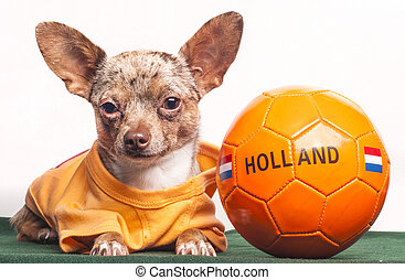 holland, futball, biztosítások, kutya, befog