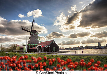 Holland with windmills - Traditional Dutch windmills with...