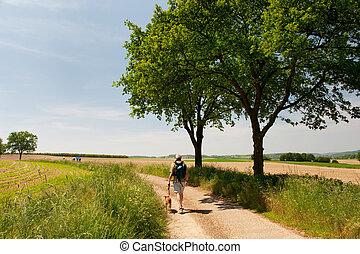 hollandais, paysage, à, marche, homme