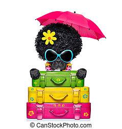 holliday luggage dog - dog on holidays with umbrella and lot...