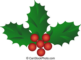 holly berries - Christmas holly berries isolated on white...