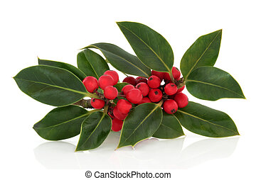 Holly Berry and Leaf Sprig - Holly leaf sprig with red...