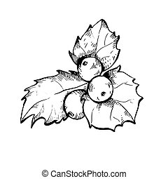 Holly berry sketch illustration