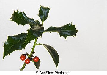 Holly branch II