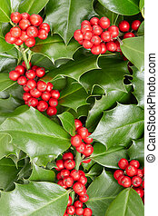 Holly, Christmas decoration background