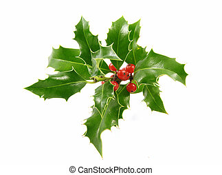 Holly - Christmas decoration - isolated holly with berries ...