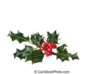 Holly Leaf and Red Berries