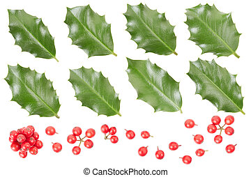 Holly leaves and berries collection