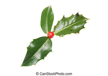 Holly leaves and single berry