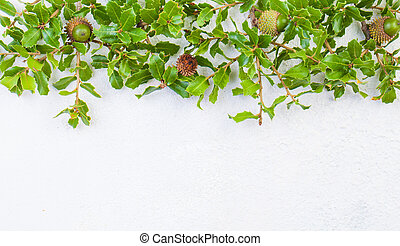 Holly leaves border on white stucco