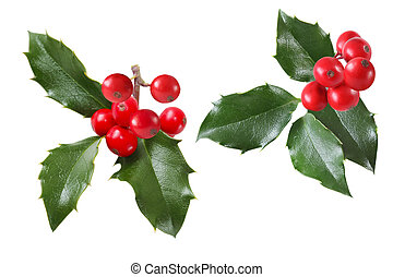 Set of holly sprigs isolatead on white background