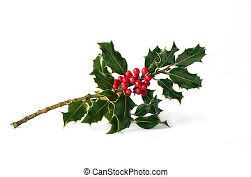 Holly leaf sprig with red berries over white background.