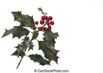 Holly with bright red berries isolated against a white...