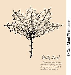 holly leaf sketch by hand drawing.