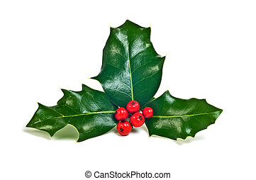 Sprig of fresh holly with glossy green leaves and vivid red berries