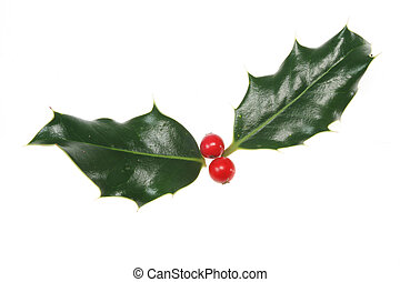 Sprig of holly with berries isolated on white