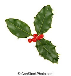 Sprig of holly with ripe red berries isolated against white