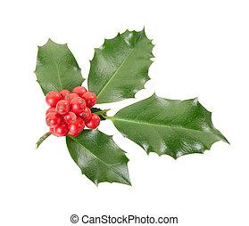 Holly twig, Christmas decoration