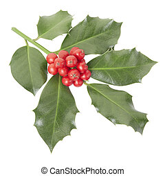 Holly twig isolated on white