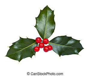 Holly and berries on a white background