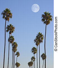Hollywood Paradise - It may not be paradise in real life, ...
