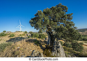holm oak and modern wind turbines against blue sky - Widen...