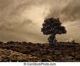 Holm oak in a rocky place.