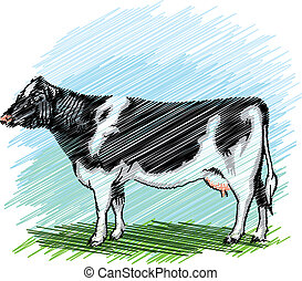 holstein, ベクトル, cow., イラスト