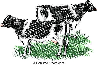 Holstein cow illustration