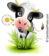 Holstein cow in grass - Cute Holstein cow in green grass