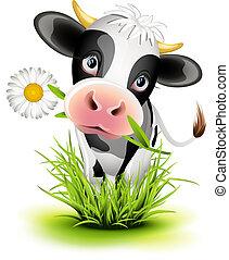 Holstein cow in grass - Cute Holstein cow in green grass