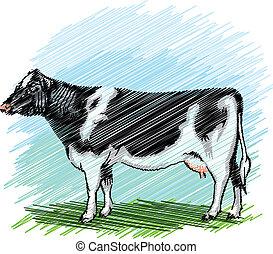 holstein, vetorial, cow., ilustração