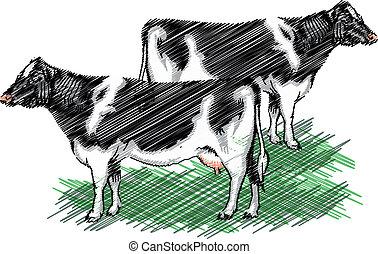 holstein, vettore, cow., illustrazione