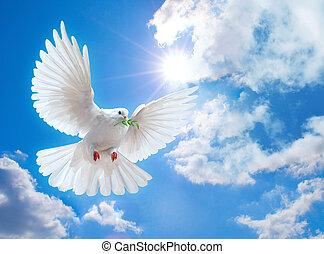 holub, ve vzduchu, s, křídla, dokořán