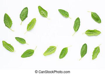 Holy basil leaves on white