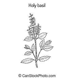 Holy Basil Ocimum tenuiflorum , or tulasi. Hand drawn...