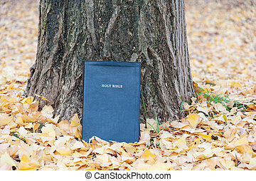 Holy Bible on tree trunk outdoors in autumn with yellow fallen leaves. Close-up. Copy space