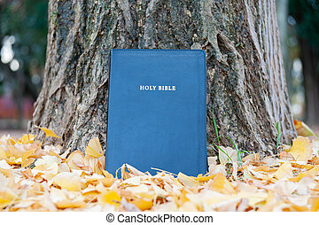 Holy Bible on tree trunk outdoors in autumn with yellow fallen leaves. Close-up